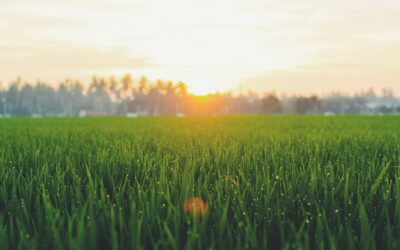 Why grass paper is gaining momentum